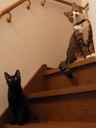 猫のお友だち くましーちゃん編。_a0143140_16534041.jpg