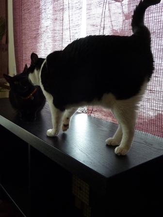 猫のお友だち くましーちゃん編。_a0143140_16542873.jpg