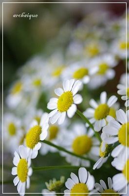 森の工房 お花の日!!_c0207890_1545913.jpg