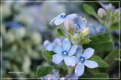 森の工房 お花の日!!_c0207890_15584.jpg