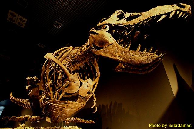 恐竜博2011_b0189104_955468.jpg