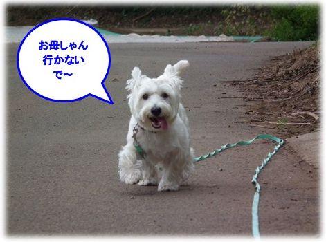 a0161111_2012028.jpg