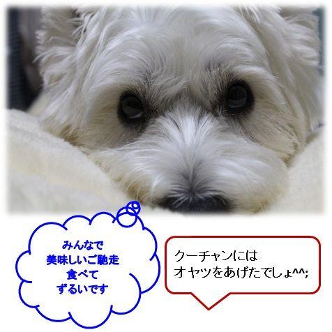 a0161111_2025384.jpg