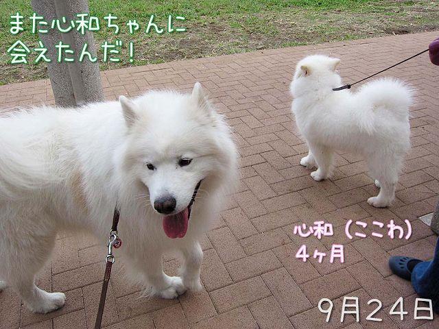 2日連続 心和ちゃん_c0062832_3411735.jpg