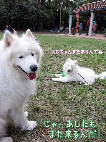 2日連続 心和ちゃん_c0062832_342497.jpg