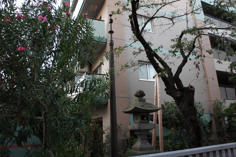 松戸神社 参道改修工事  2011.9.24_e0223769_1634147.jpg