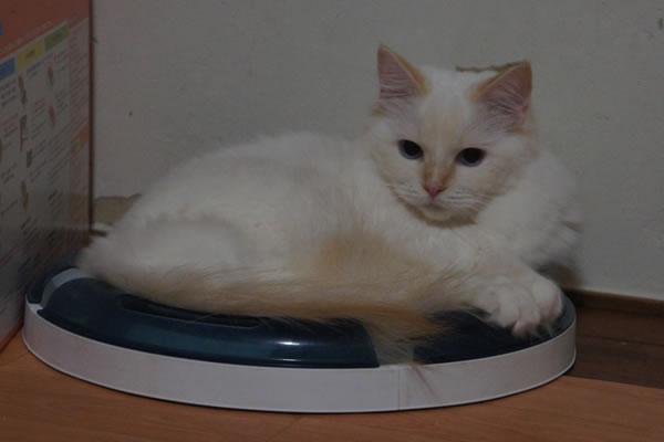 天真爛漫な仔猫が一番強いね(笑_a0188883_0103212.jpg