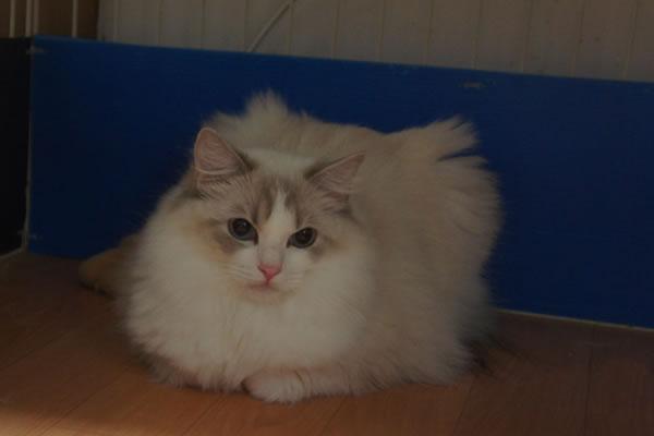 天真爛漫な仔猫が一番強いね(笑_a0188883_0115749.jpg