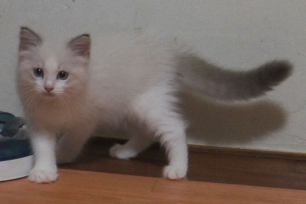 天真爛漫な仔猫が一番強いね(笑_a0188883_016023.jpg