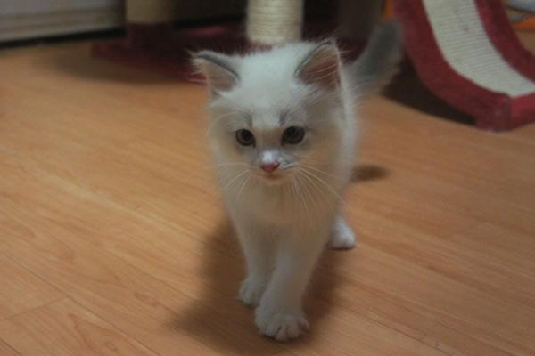 天真爛漫な仔猫が一番強いね(笑_a0188883_055117.jpg