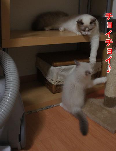 天真爛漫な仔猫が一番強いね(笑_a0188883_071747.jpg