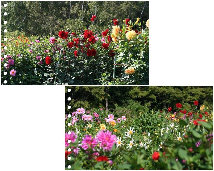百合が原の秋の花(9・23)_f0146493_15493237.jpg