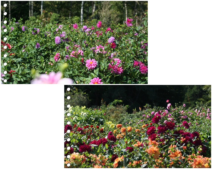 百合が原の秋の花(9・23)_f0146493_15493881.jpg