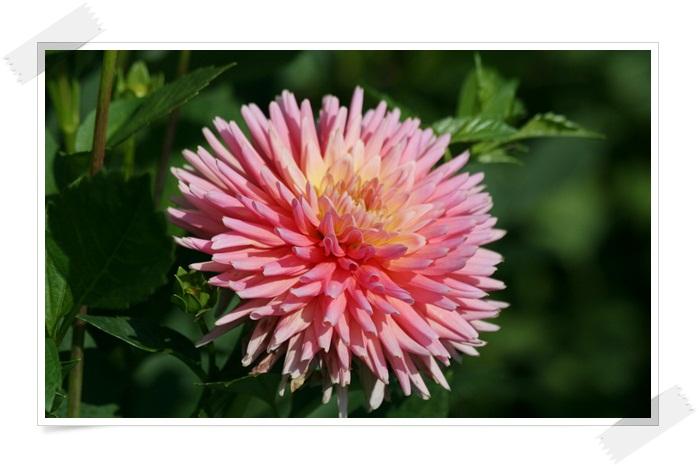 百合が原の秋の花(9・23)_f0146493_15495241.jpg