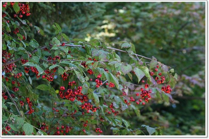 百合が原の秋の花(9・23)_f0146493_1550045.jpg