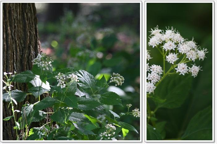 百合が原の秋の花(9・23)_f0146493_15501651.jpg