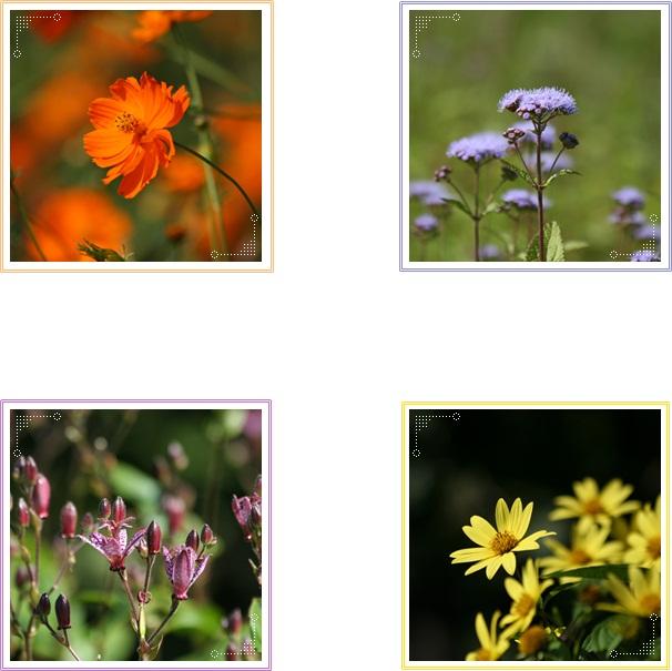 百合が原の秋の花(9・23)_f0146493_15503352.jpg
