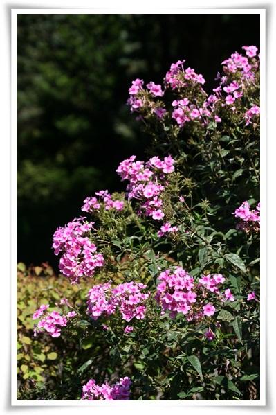 百合が原の秋の花(9・23)_f0146493_15504098.jpg