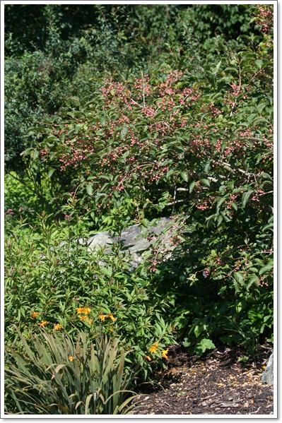 百合が原の秋の花(9・23)_f0146493_155073.jpg