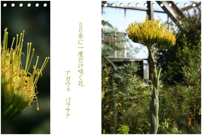 百合が原公園の温室(9・23)_f0146493_166992.jpg