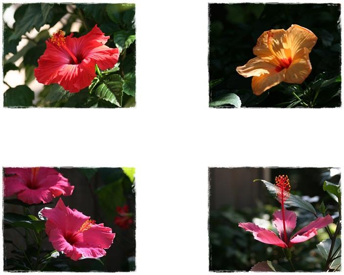 百合が原公園の温室(9・23)_f0146493_1671020.jpg