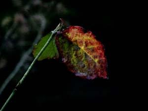 秋色の中で_e0120896_6412961.jpg