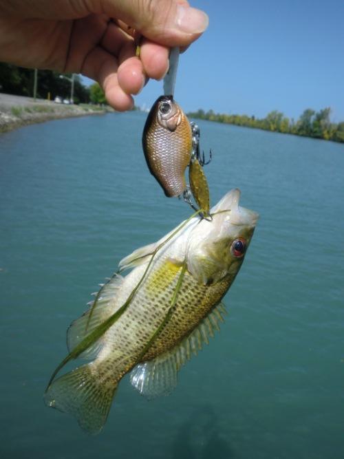 釣行記 世界第4位の大運河にて♪_d0145899_10481166.jpg