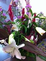 今週のお花&セール情報_a0200423_1926458.jpg