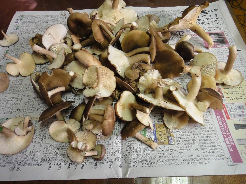 収穫_c0111229_17434949.jpg