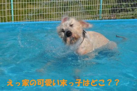 f0176830_15553276.jpg
