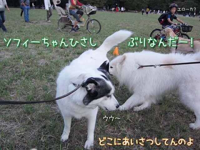 おっきな公園3連勤!_c0062832_614890.jpg