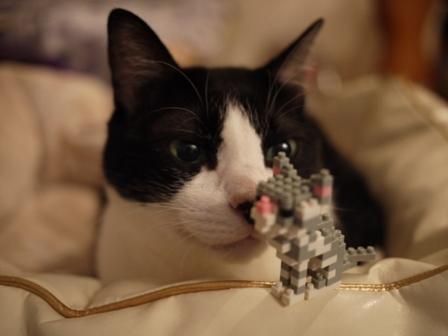 世界最小級ブロックnanoblock猫 空アメショグーグー編。_a0143140_22304811.jpg