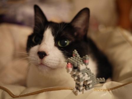 世界最小級ブロックnanoblock猫 空アメショグーグー編。_a0143140_2231273.jpg