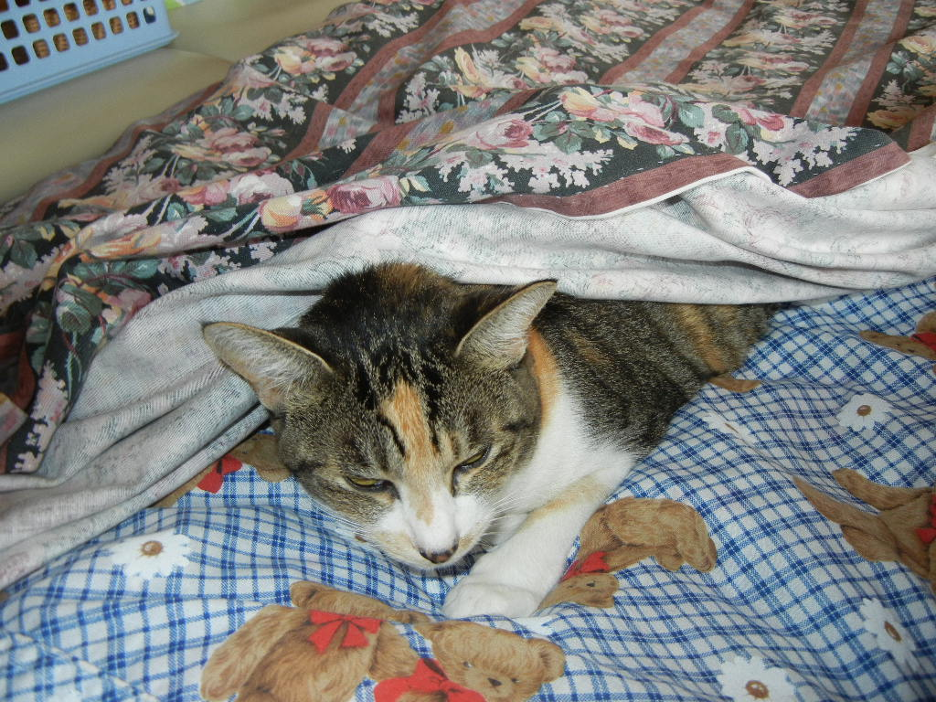 2011年9月27日(火)冬の絨毯出しました!_f0060461_10361030.jpg