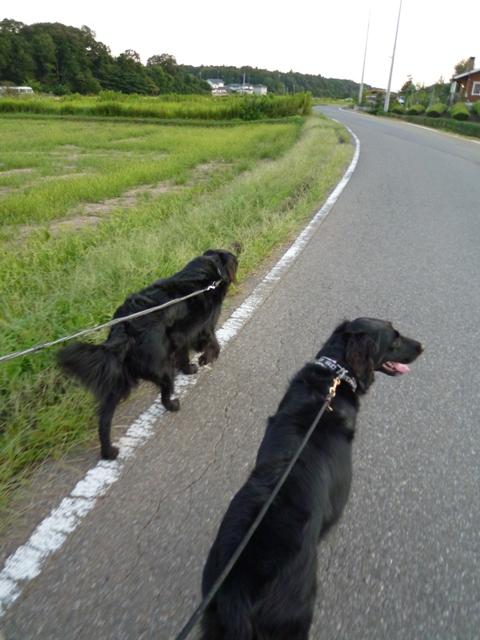 2011 実りを感じるお散歩_c0134862_22442822.jpg