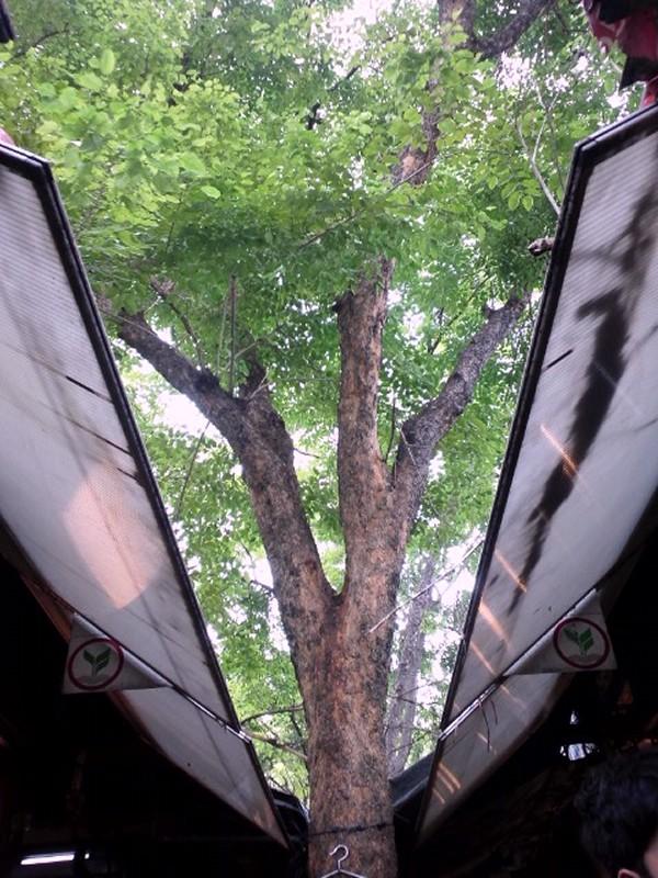 GREEN    ~ 木々と花   _d0103566_22174751.jpg