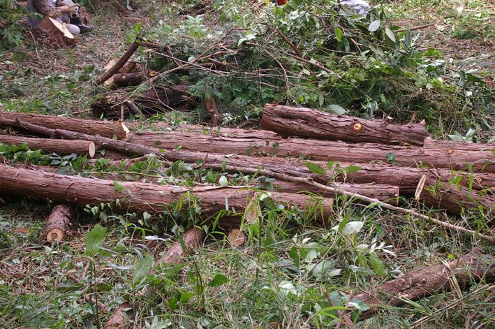 六国見山森林公園のヒノキ伐採に着手(2011・9・27)_c0014967_18485319.jpg