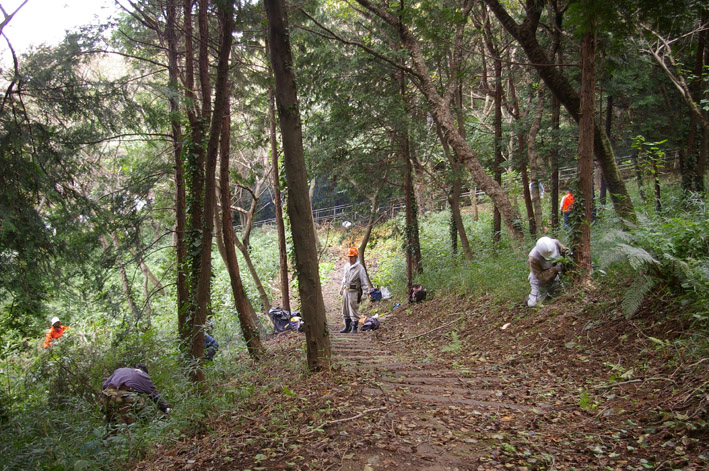六国見山森林公園のヒノキ伐採に着手(2011・9・27)_c0014967_18501797.jpg
