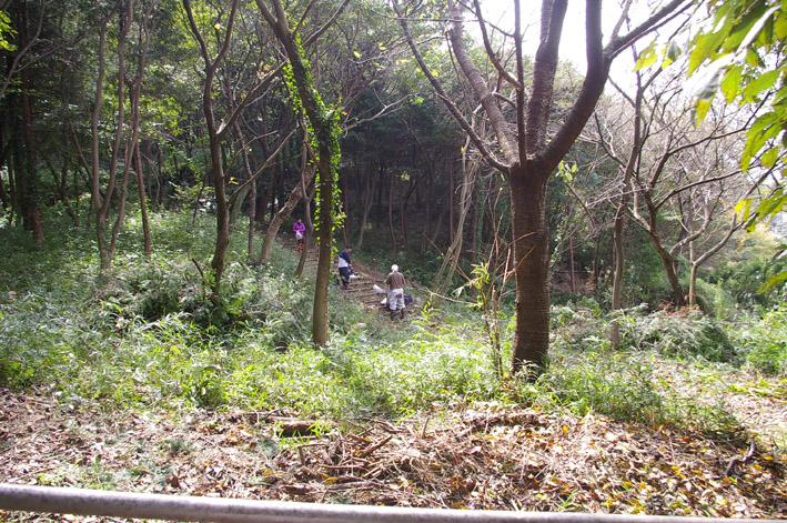 六国見山森林公園のヒノキ伐採に着手(2011・9・27)_c0014967_18545847.jpg