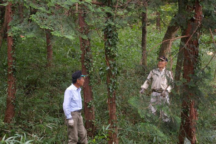 六国見山森林公園のヒノキ伐採に着手(2011・9・27)_c0014967_20181397.jpg