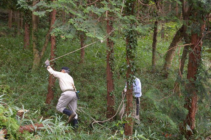 六国見山森林公園のヒノキ伐採に着手(2011・9・27)_c0014967_20184315.jpg