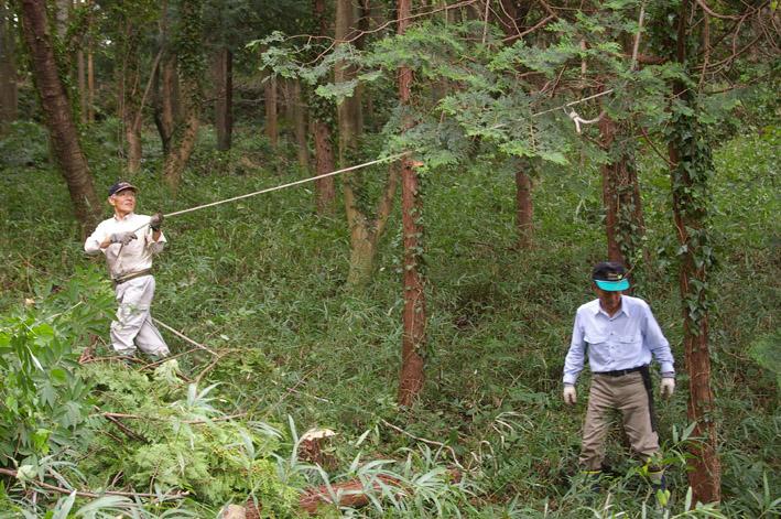 六国見山森林公園のヒノキ伐採に着手(2011・9・27)_c0014967_20185836.jpg