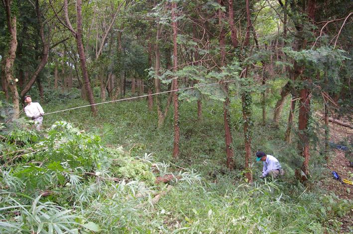六国見山森林公園のヒノキ伐採に着手(2011・9・27)_c0014967_20191251.jpg