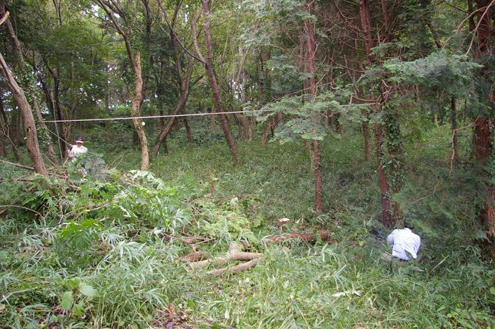 六国見山森林公園のヒノキ伐採に着手(2011・9・27)_c0014967_20192835.jpg