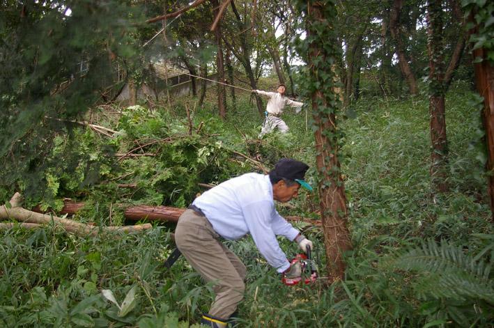 六国見山森林公園のヒノキ伐採に着手(2011・9・27)_c0014967_20194152.jpg