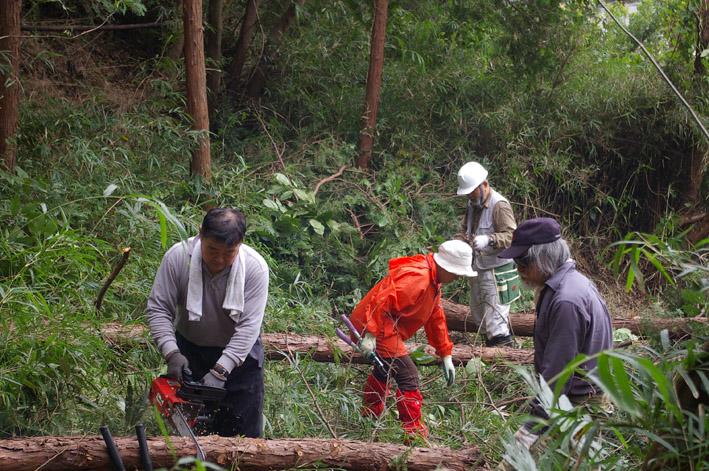六国見山森林公園のヒノキ伐採に着手(2011・9・27)_c0014967_20201179.jpg