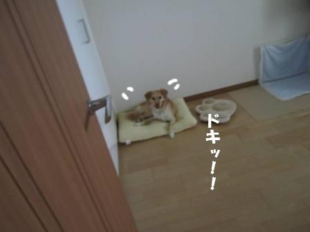 c0196992_22185447.jpg