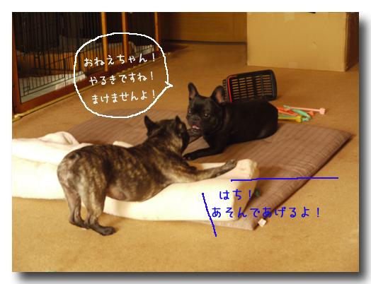 b0134197_221358.jpg