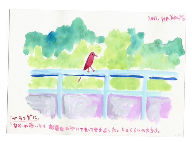 なぞの赤い鳥_e0247108_19402311.jpg