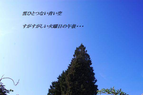 d0104926_4114036.jpg